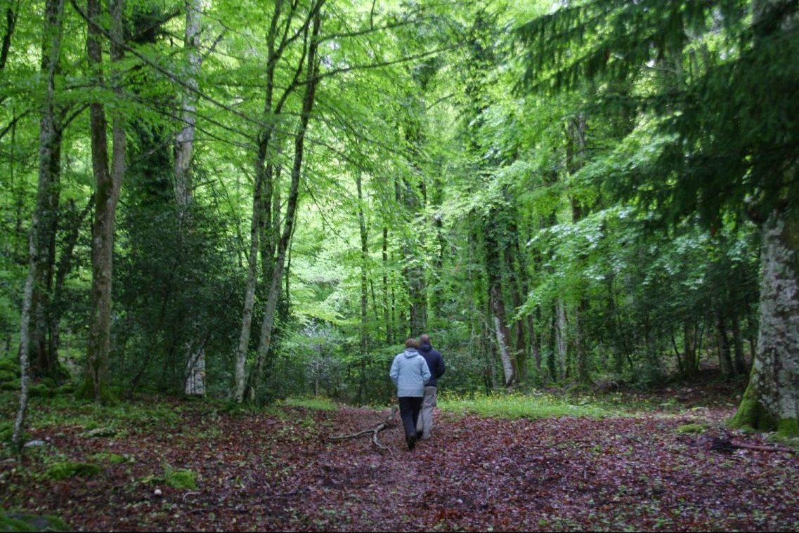 foresta umbra 2