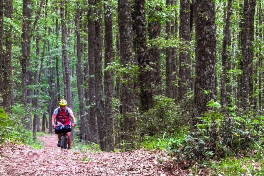 foresta umbra 4